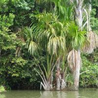 Peru-Lake-sandoval-Inkaterra-amazonica-peru-trip-travel