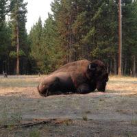 Buffalo-Wyoming-Yellow-stone-road-trip-family