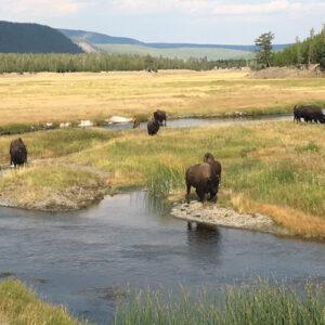 Eleonore's trip to Wyoming, US