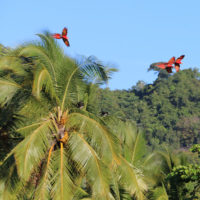 Xandari-resort-Trip-to-costa-rica-of-erika-jungle-birds-animals-beautiful-garden