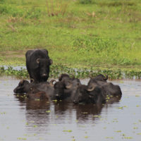 Gallery-Pantanal-Brazil-Family-Trip-Wildlife-Animals2
