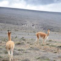 Chimborazo-Gallery-HP-Carmo-Trip-to-Ecuador-Galapagos-Trip-ideas-for-families-Smart-trip-ideas-Itimeraries-14