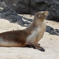 Galapagos-Gallery-HP-Carmo-Trip-to-Ecuador-Galapagos-Trip-ideas-for-families-Smart-trip-ideas-Itimeraries-7