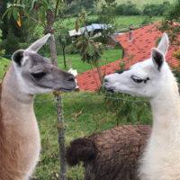 Nono-Gallery-HP-Carmo-Trip-to-Ecuador-Galapagos-Trip-ideas-for-families-Smart-trip-ideas-Itimeraries-3
