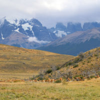 Gallery-Stephanie-Chile-Patagonie-Trip-ideas-for-families-11