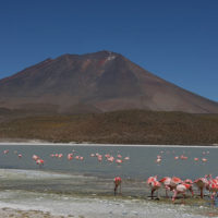 Karen-Trip-to-Bolivia-Trip-inspiration-and-ideas-for-families-and-kids-laguna-pink-flamenco