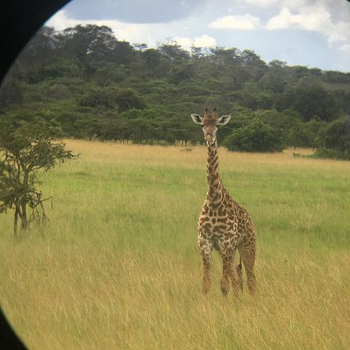 Stop-2-Akagela-NP-Safari-Amazing-trip-to-Rwanda-with-kids-and-families