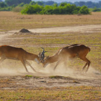 Gal-9--Stephanie-trip-to-Uganda-Family-safari-Africa