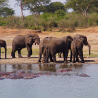 gal-10--Stephanie-trip-to-Uganda-Family-safari-Africa