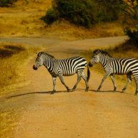 gal-17--Stephanie-trip-to-Uganda-Family-safari-Africa