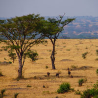gal-5--Stephanie-trip-to-Uganda-Family-safari-Africa
