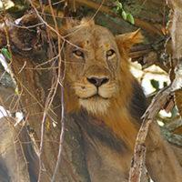 gal12---Stephanie-trip-to-Uganda-Family-safari-Africa