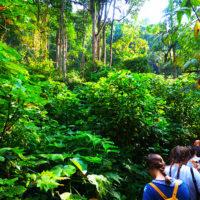 gal15--Stephanie-trip-to-Uganda-Family-safari-Africa