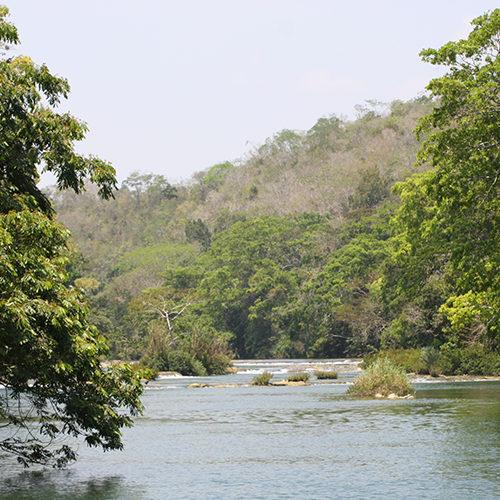 Giant Rainforest lodge