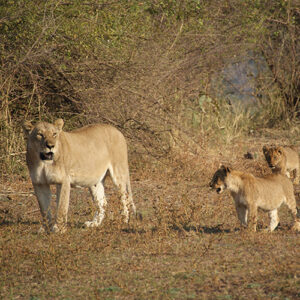 Jo's safari trip to Zambia